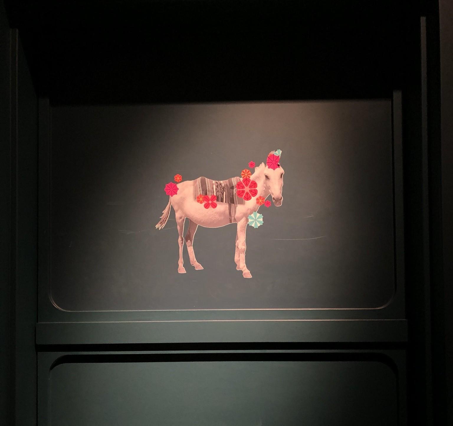 Ghost Donkey, Cosmopolitan