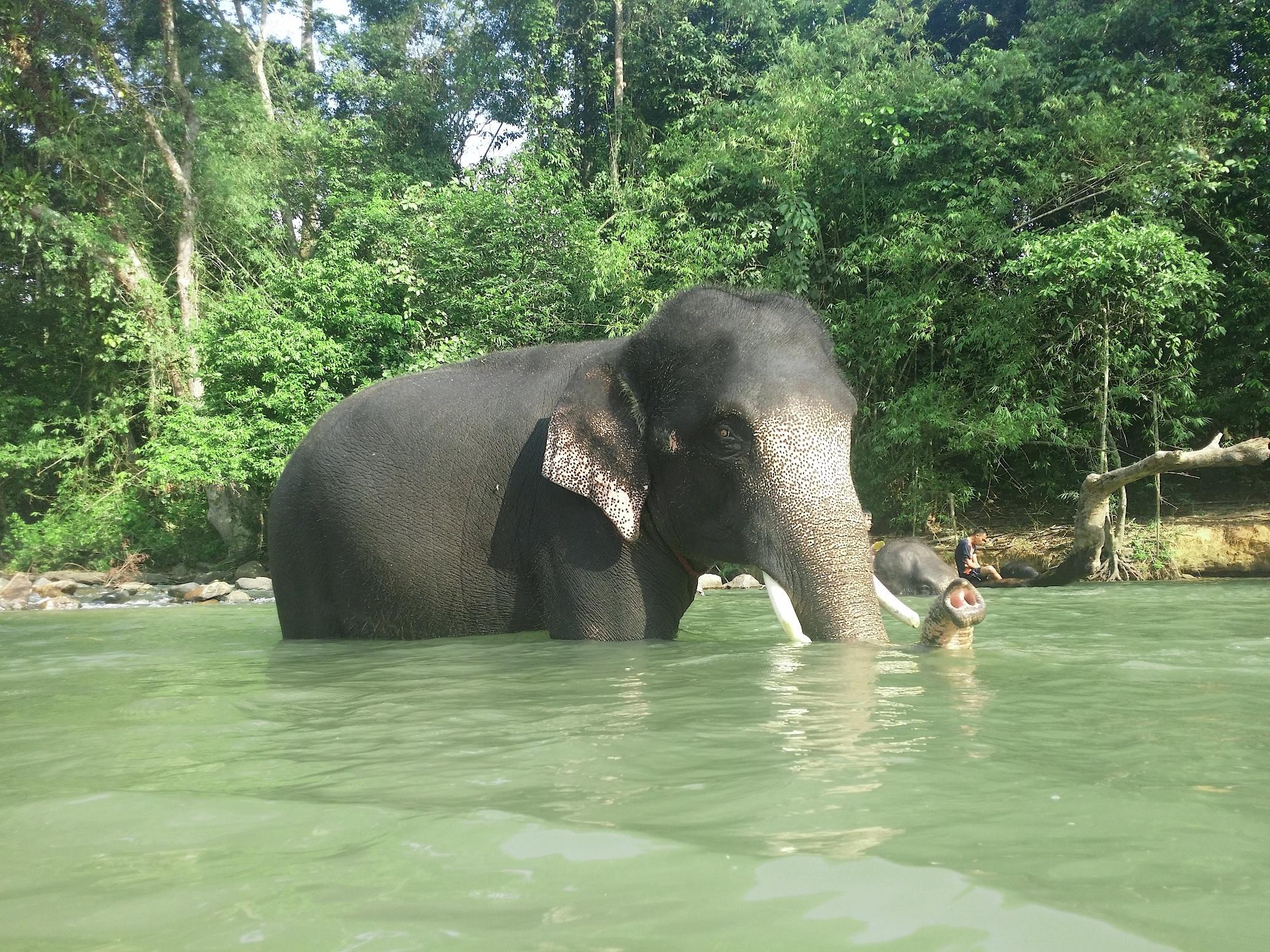 Kenyir Elephant Conservation Village