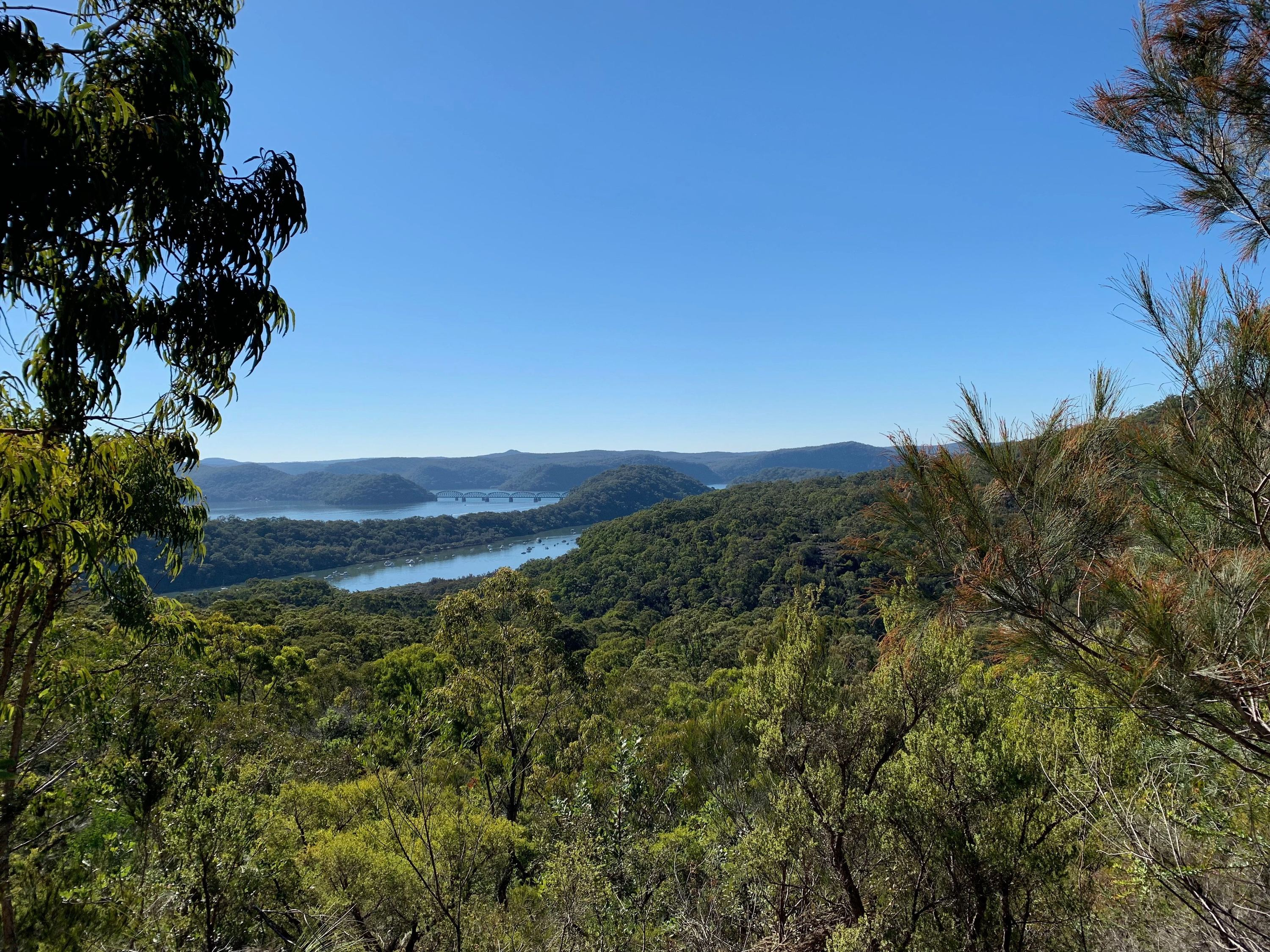 View of the Hawkesbury River from high up during the Brooklyn to Cowan Bushwalk