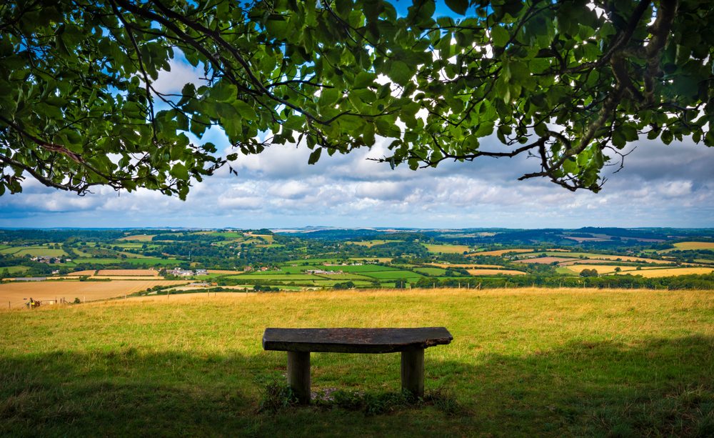 Bench overlooking Cranbourne Chase, UK