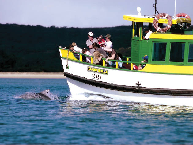 People aboard the Curranulla on the Cronulla to Bundeena ferry route, looking at dolphins in the water.