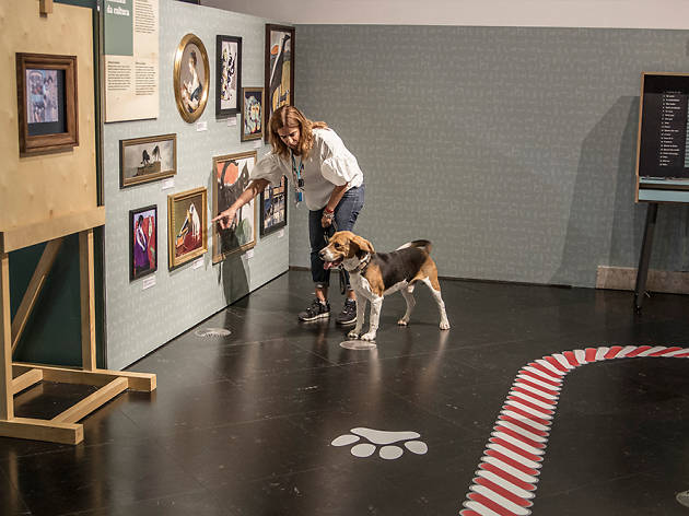 Cães e Gatos, Pavilhão do Conhecimento