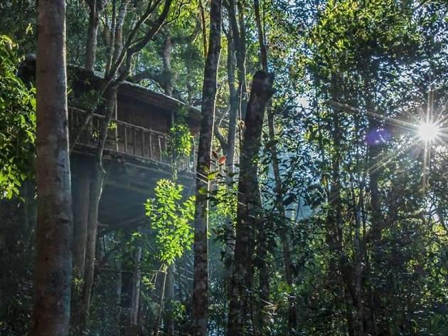 Terra's Treehouse