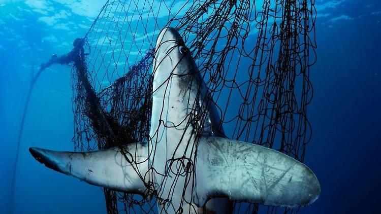 Sharks, Uma Missão de Brian Skerry