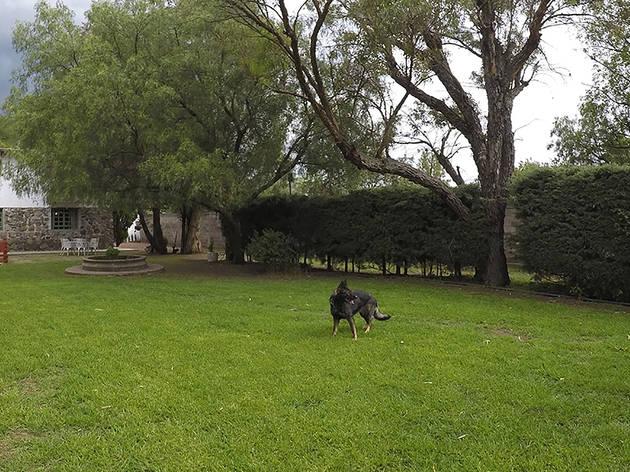 Campo Thomé (Foto: Cortesía Campo Thomé)