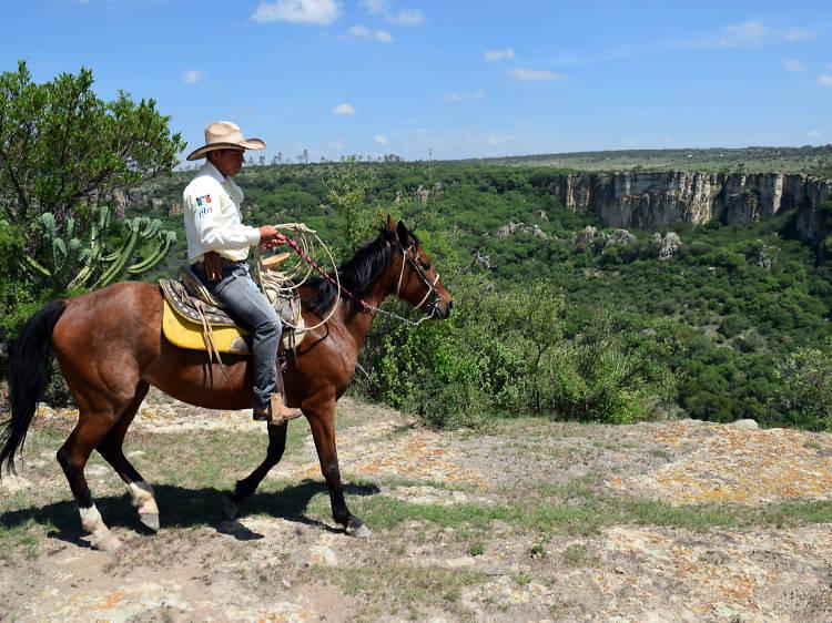 Recorrido en caballo por el Coyote Canyon