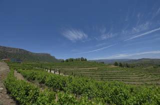 Visita la bodega Familia Torres Priorat con cata de dos vinos