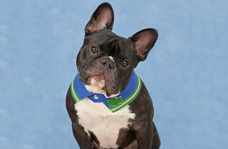 Dog Photog School Photo Day