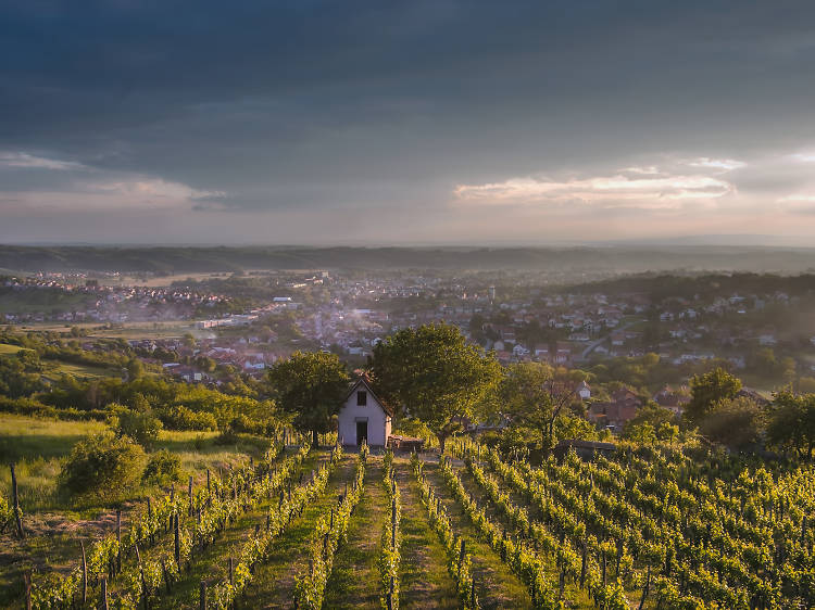 Discover some of Croatia's best white wines