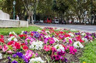 flores na avenida da liberdade