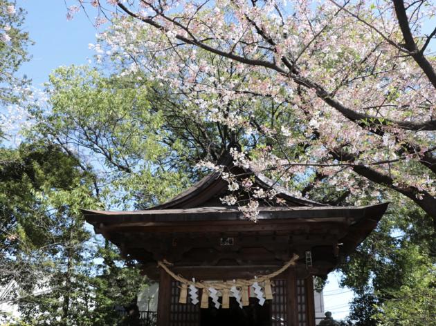Setagaya Hachimangu