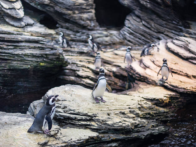 Pinguins no Oceanário