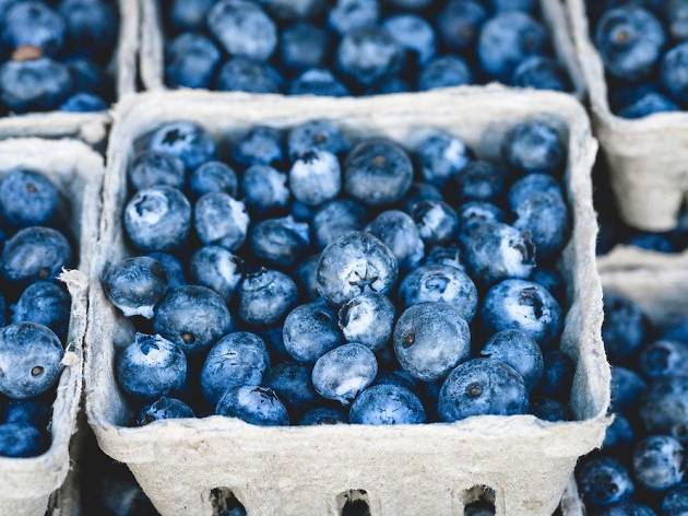 Blueberry picking in New York