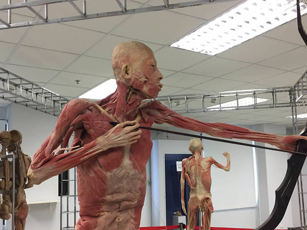 The Human Body Museum 01
