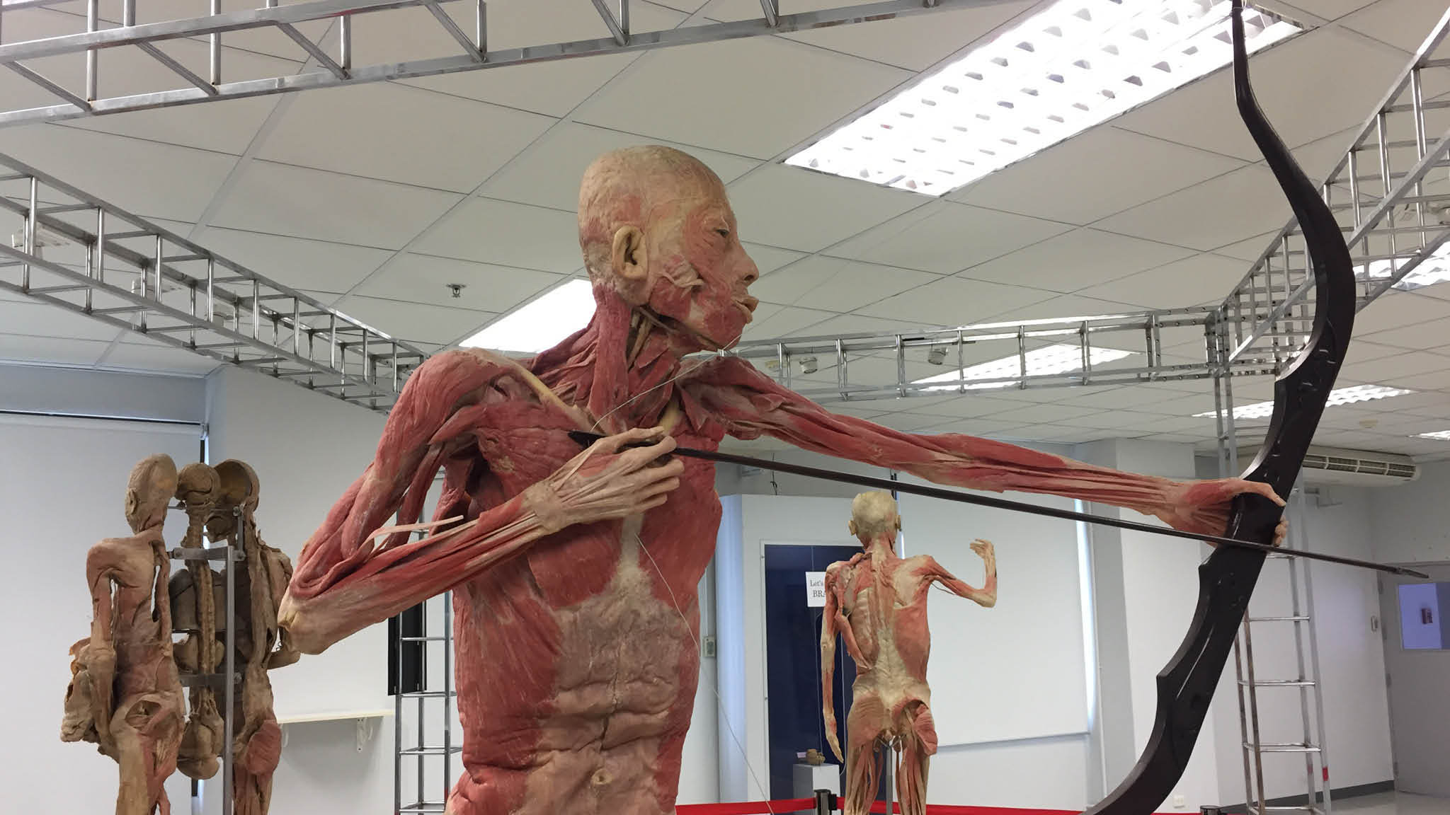 The Human Body Museum
