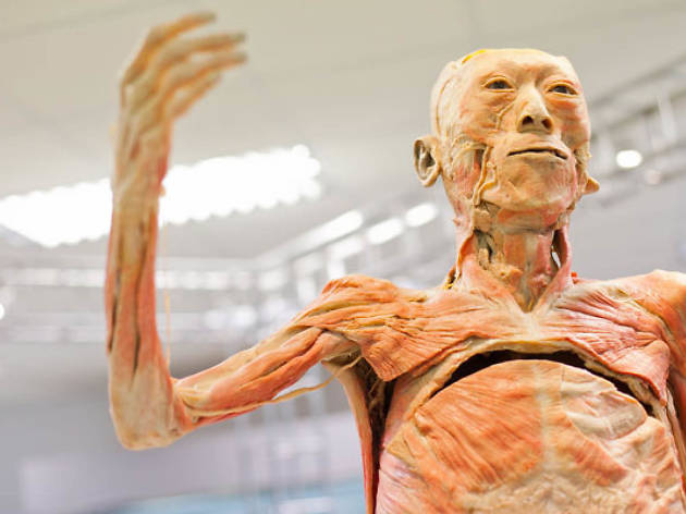 The Human Body Museum 02