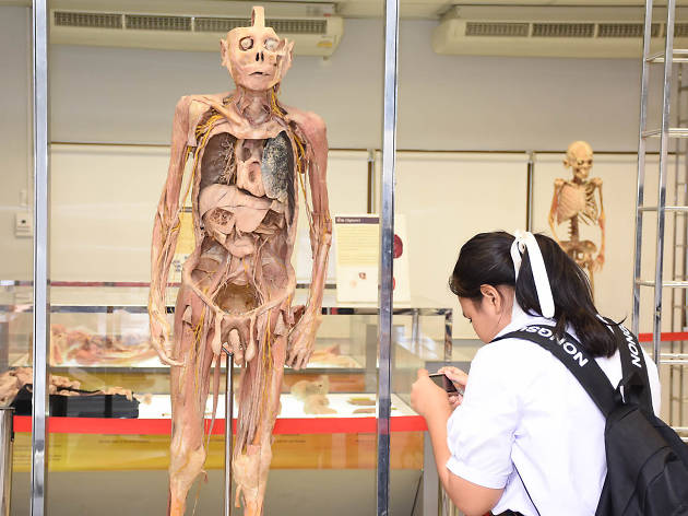 The Human Body Museum 03