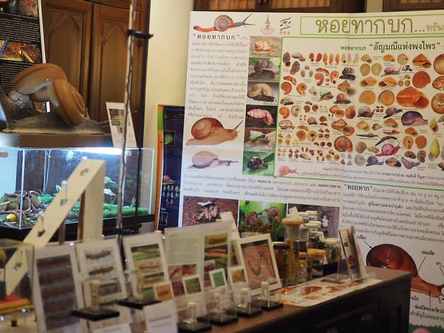 Snail Museum