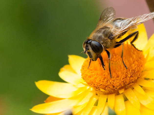 Celebrate National Honey Bee Day this Saturday with these buzzworthy events