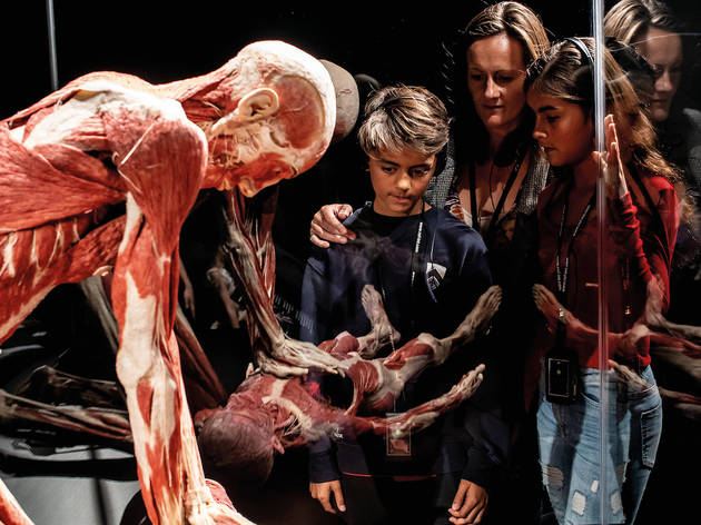 Up to 32% off 'Body Worlds' London fast-track tickets