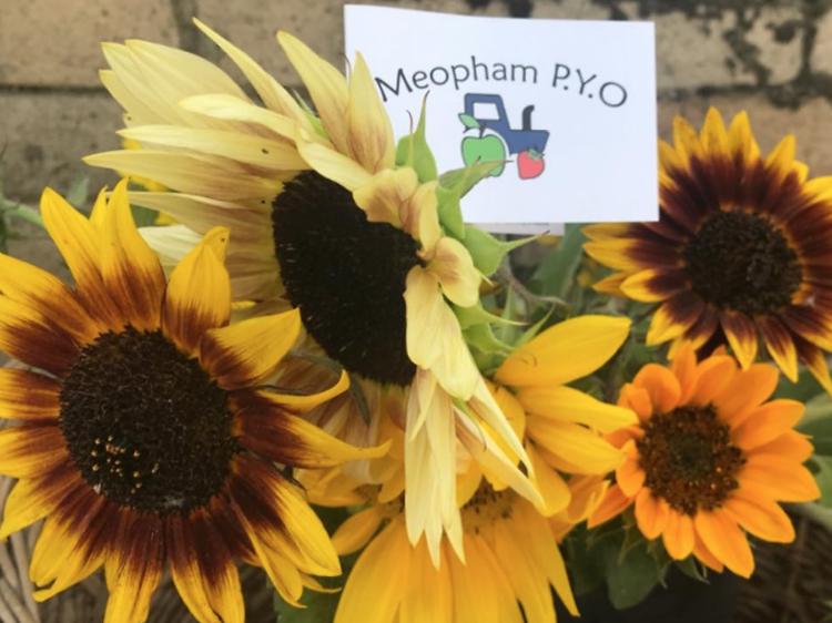 Meopham PYO