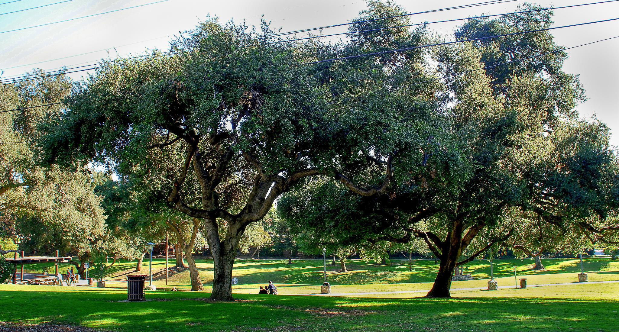 Garfield Park