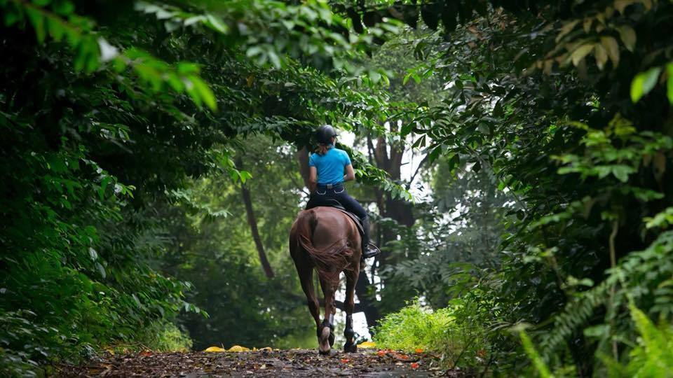 Learn horse riding at these stables in Singapore