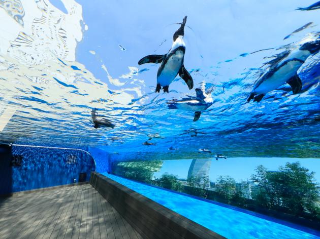 Sunshine City Aquarium