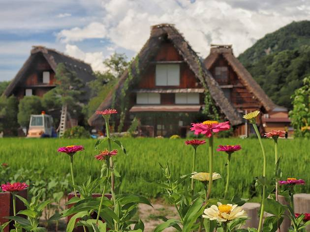 Flowers at Shirakawago Village