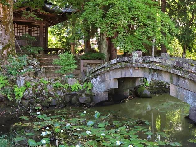 Water lillies in Gifu
