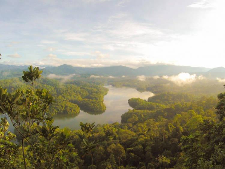 捐款支持保護雨林組織