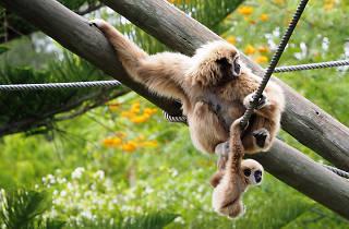 dia mundial dos primatas
