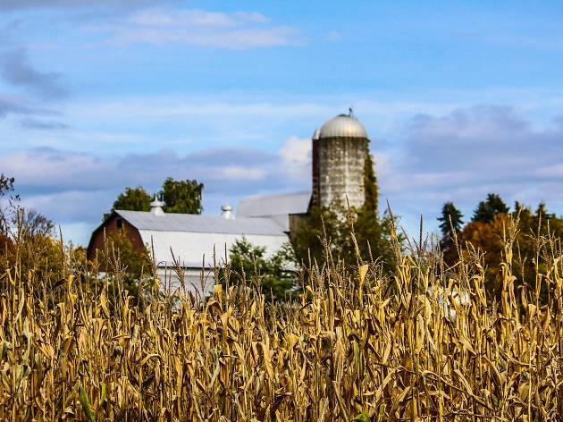 The 10 best corn mazes near Chicago