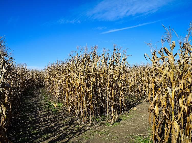 Kroll's Fall Harvest Farm