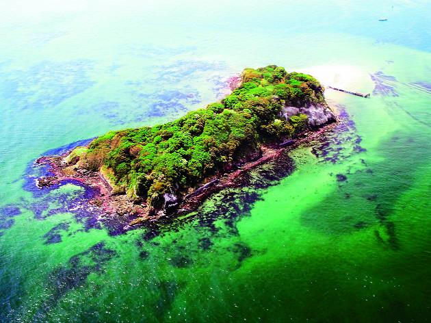 Sense Island – Sarushima Dark Art Island