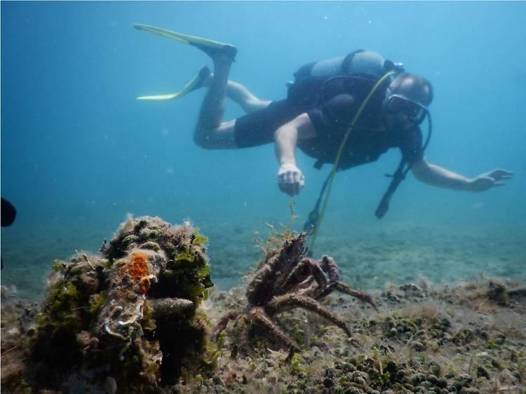 Try deep-sea diving