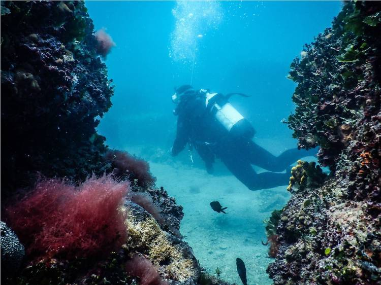 Dare to go diving