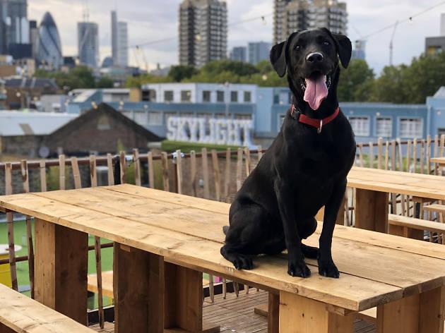 Dog Day at Skylight