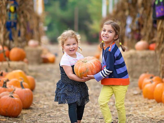 Pumpkin picking NY
