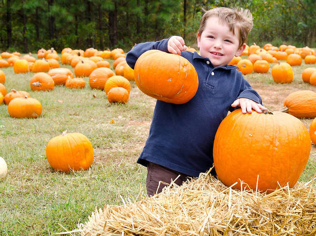 Fall festivals and fairs