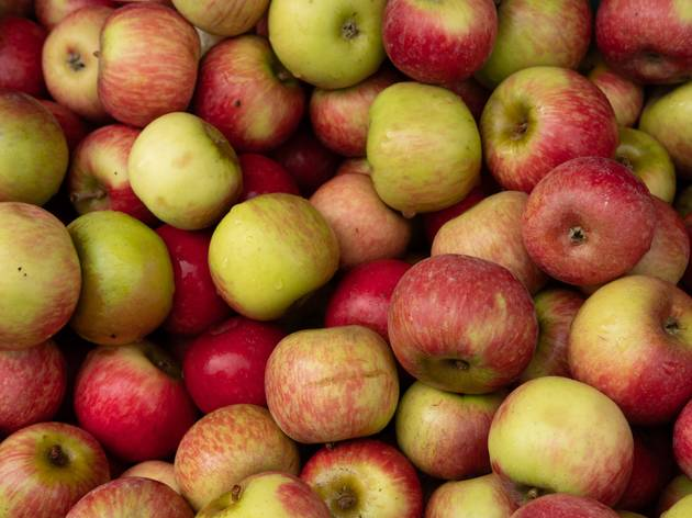 Apple picking locations you need to visit this autumn