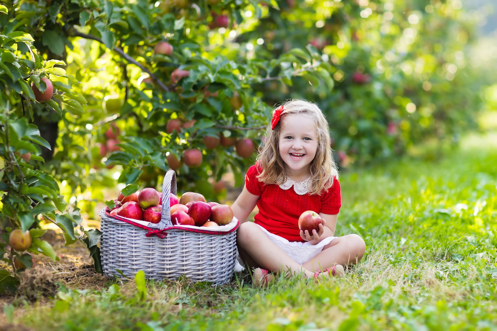The best apple picking spots for NYC families