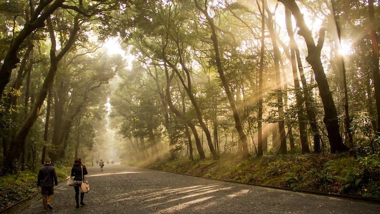 Meiji Shrine outer forest