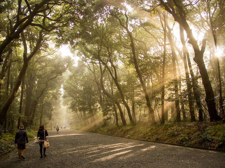 Best nature escapes in Tokyo
