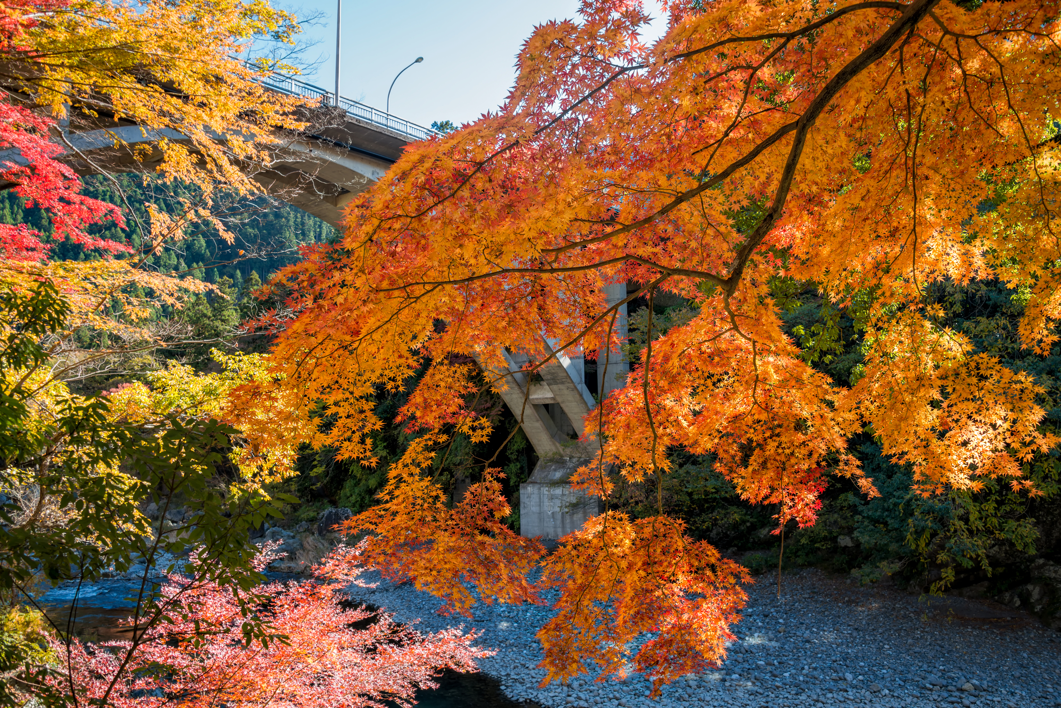 Where to admire autumn leaves in Tokyo