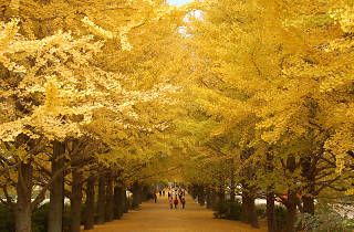 Showa Kinen Park - autumn - cropped
