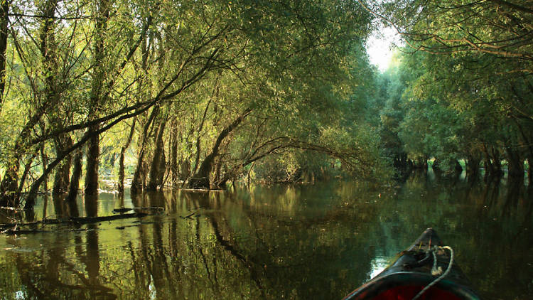 Kopački Rit Nature Park