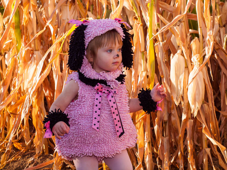 Where to find a corn maze near me in New York