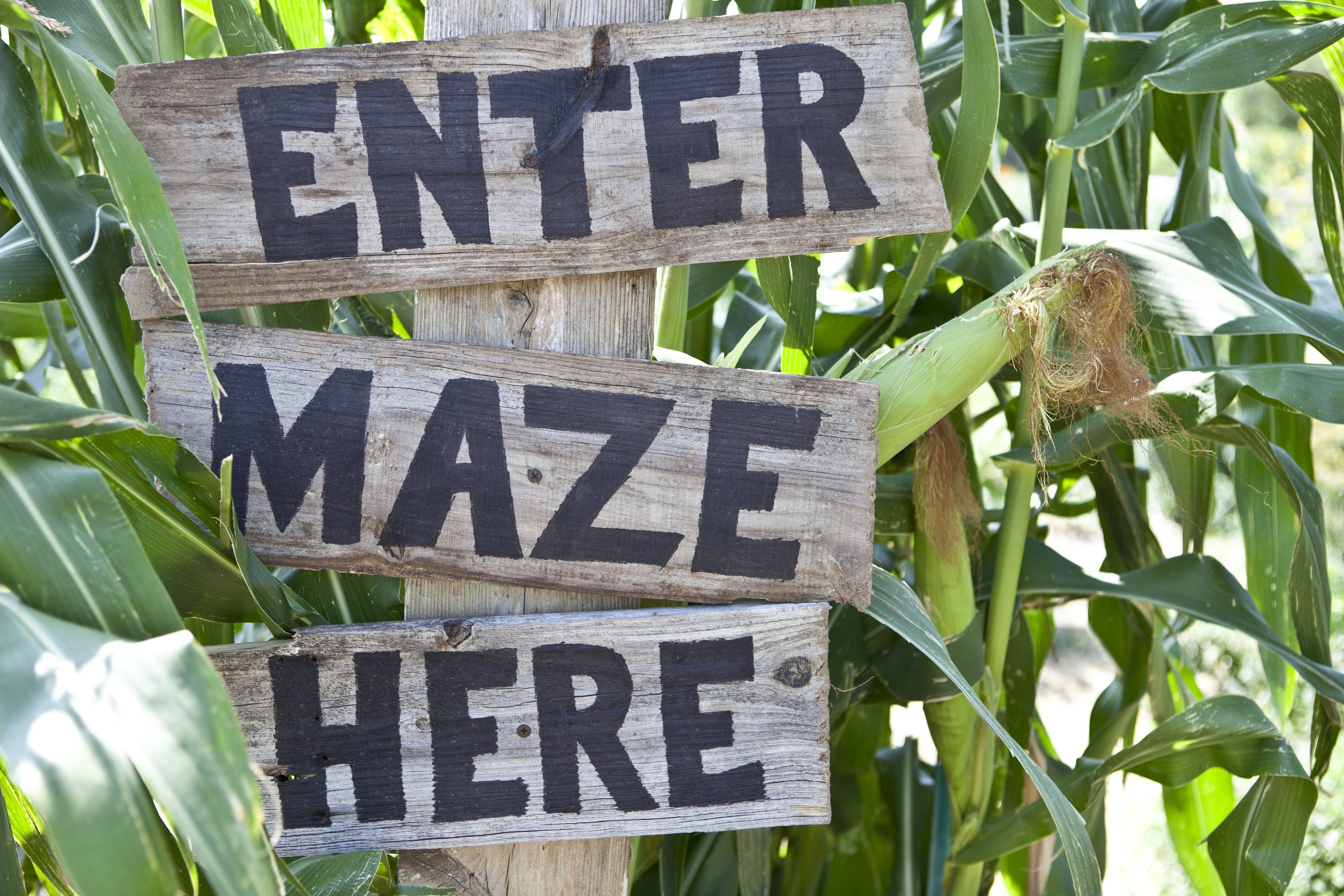13 Corn Mazes Ny Families Should Visit This Fall For Family Fun
