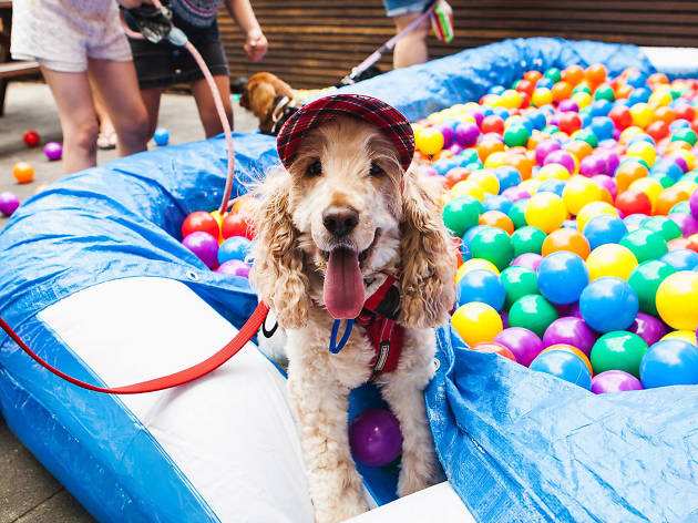 The puppy ballpit at the North Gong Dog Day